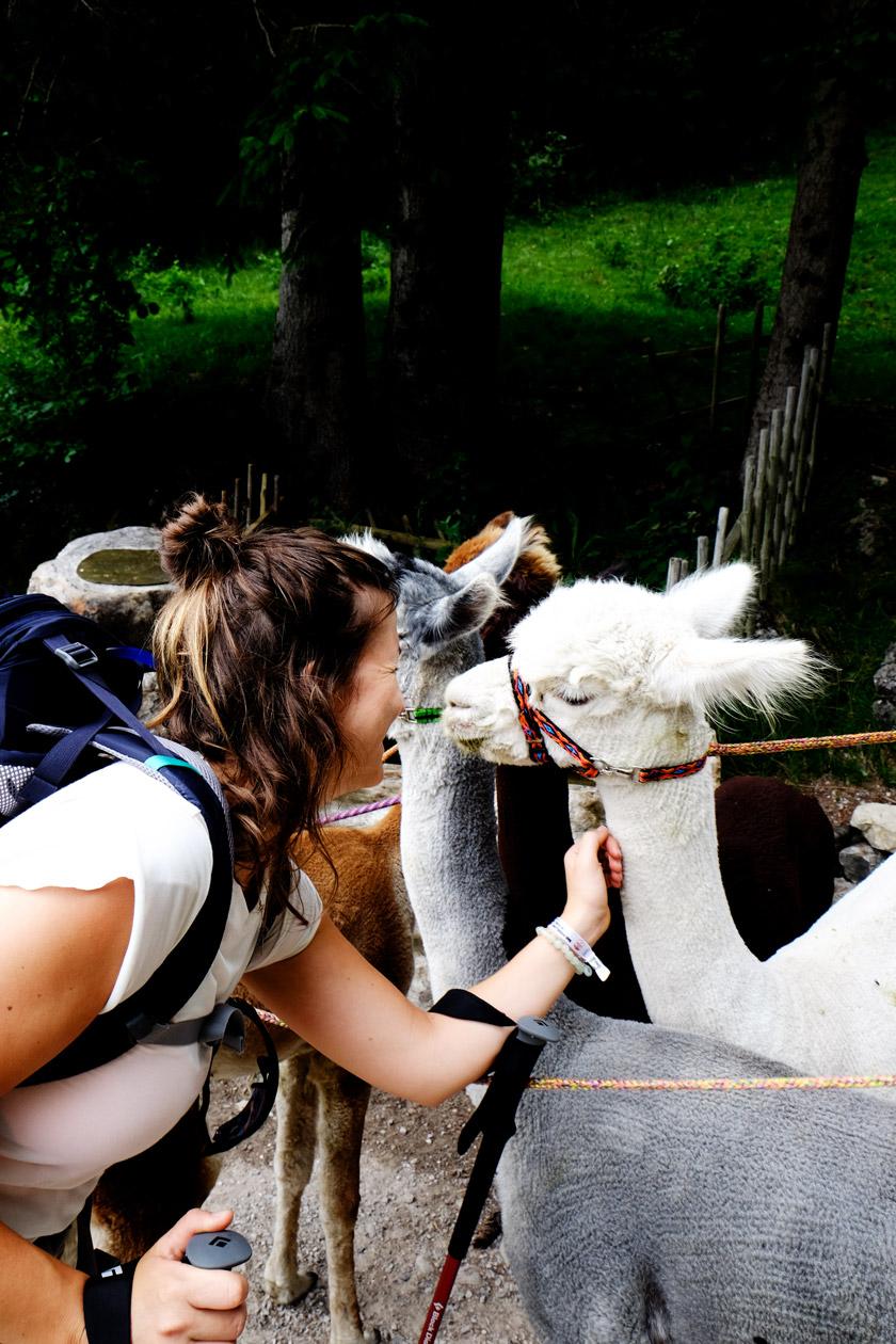 Munichmountaingirls-christina-ilchmann-24-stunden-bayern-wandern-lamas