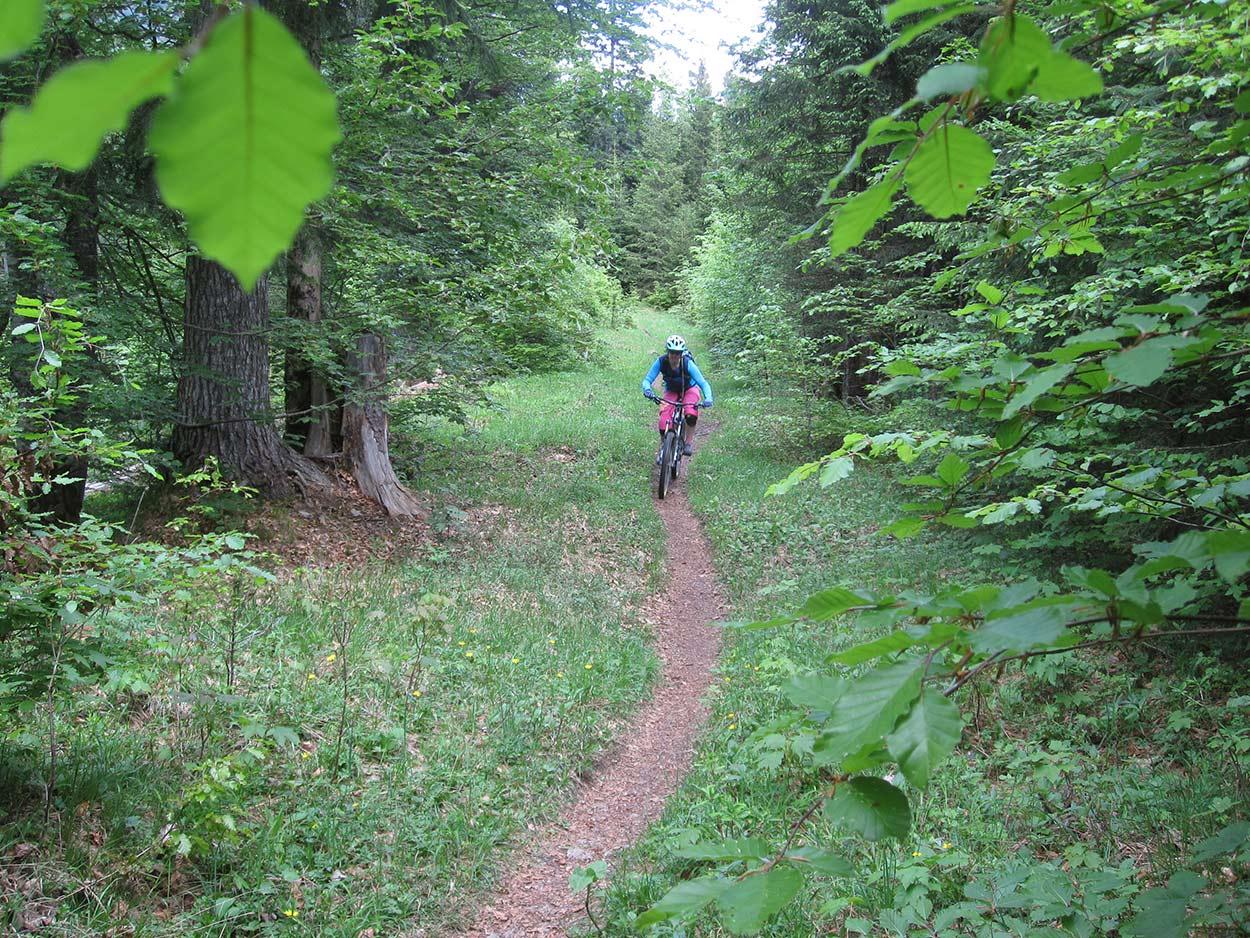 Mountainbike Packliste MTB Singletrail