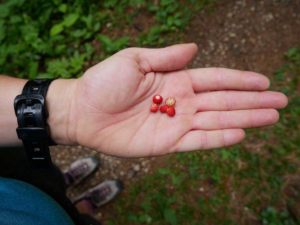 walderdbeeren-munichmountaingirls-tirolzer-zugspitzarena-kooperation