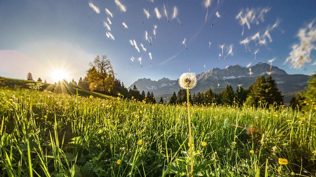 web-Fruehling-Panorama-Wilder-Kaiser-Foto-Emanuel-Adensam-3©eafoto