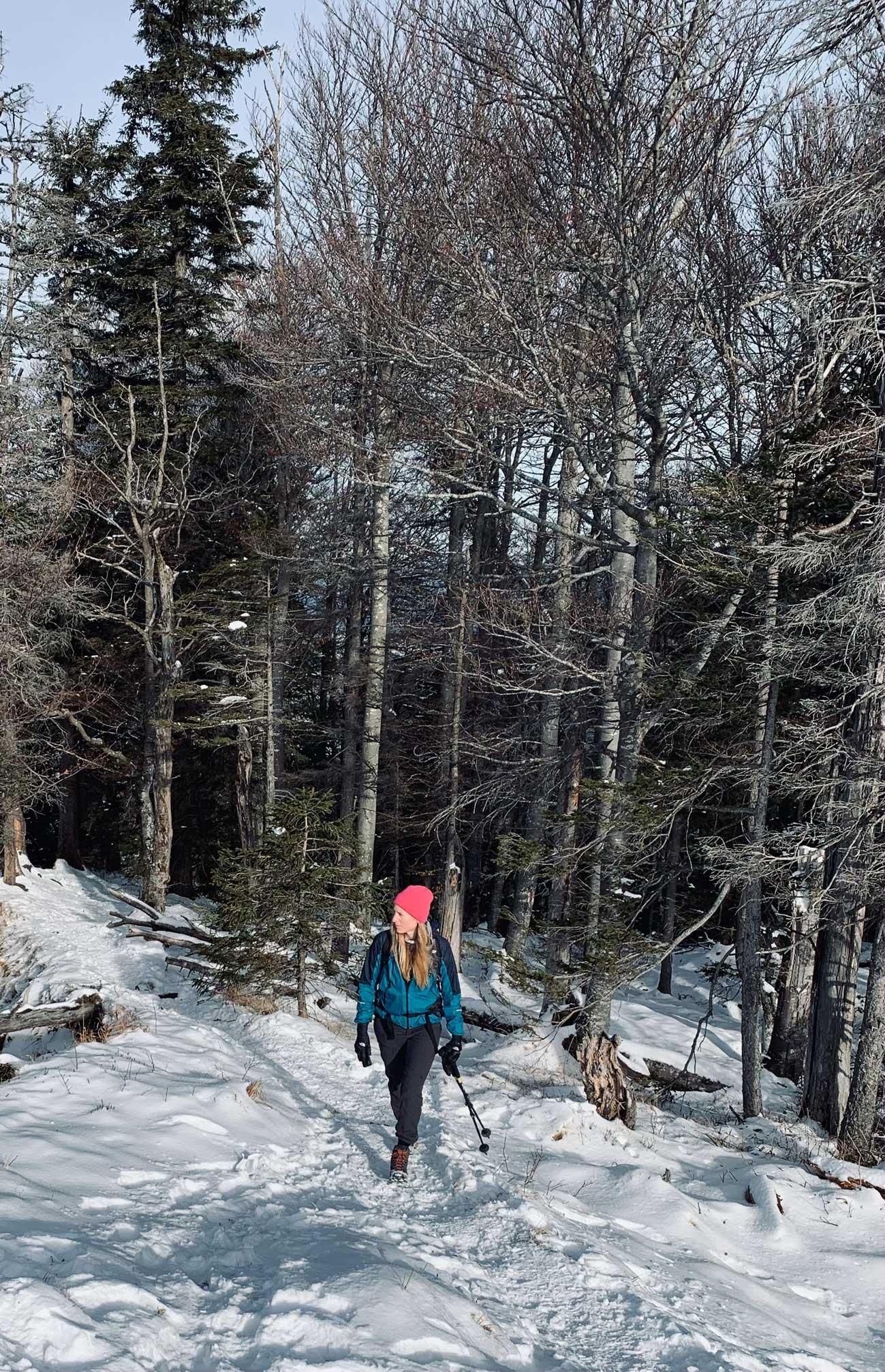 winterwandern-wald