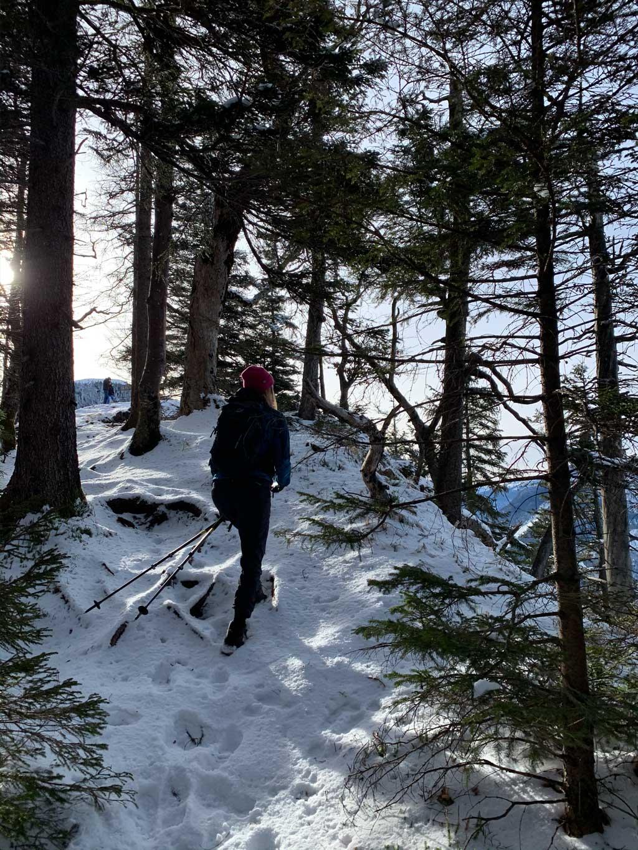winterwandern-waldwege